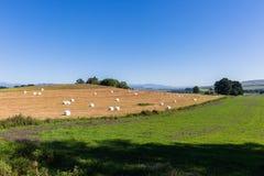 Agricoltura del paesaggio delle balle dell'erba Fotografia Stock Libera da Diritti