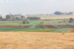 Agricoltura del paesaggio delle verdure Fotografia Stock Libera da Diritti