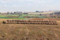 Agricoltura del paesaggio delle verdure Immagini Stock Libere da Diritti