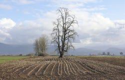 Agricoltura del paesaggio di inverno Fotografia Stock Libera da Diritti