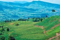 Agricoltura del paesaggio di Topview Immagini Stock Libere da Diritti