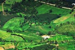 Agricoltura del paesaggio di Topview Fotografia Stock