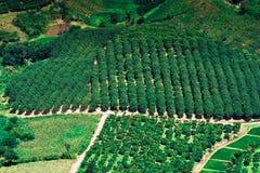 Agricoltura del paesaggio di Topview Fotografia Stock Libera da Diritti