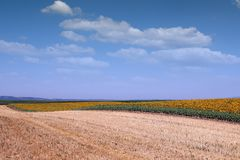 Agricoltura del paesaggio del giacimento del girasole Immagini Stock