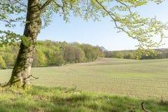 Agricoltura del paesaggio nel sud della Svezia Fotografia Stock Libera da Diritti