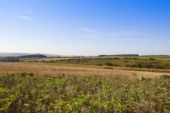 Agricoltura del paesaggio nella fine dell'estate Immagine Stock Libera da Diritti
