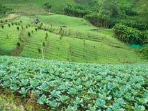 Agricoltura del paesaggio sulla montagna Fotografie Stock Libere da Diritti
