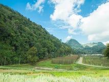 Agricoltura del paesaggio sulla montagna Fotografia Stock Libera da Diritti