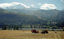 Agricoltura del Perù Fotografia Stock