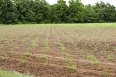 Agricoltura del raccolto. Immagine Stock Libera da Diritti