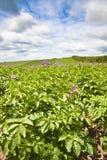 Agricoltura del raccolto del Devon Fotografia Stock