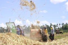 Agricoltura del riso Immagini Stock