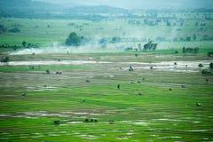 Agricoltura del riso di Viewscape e area coltivata in Tailandia Fotografia Stock Libera da Diritti
