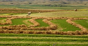 Agricoltura del Saskatchewan Immagini Stock Libere da Diritti