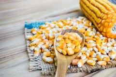 Agricoltura del seme del cereale Fotografie Stock Libere da Diritti
