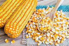 Agricoltura del seme del cereale Immagine Stock Libera da Diritti