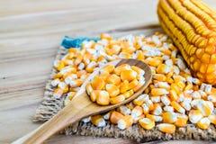 Agricoltura del seme del cereale Fotografia Stock