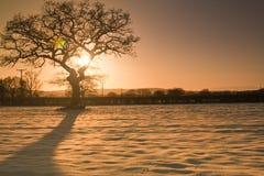 Agricoltura del sole di inverno di paesaggio Fotografie Stock