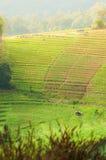 Agricoltura del terrazzo Fotografie Stock Libere da Diritti