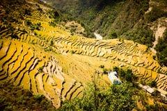 Agricoltura del terrazzo Immagini Stock