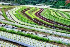 Agricoltura del terrazzo Immagini Stock Libere da Diritti