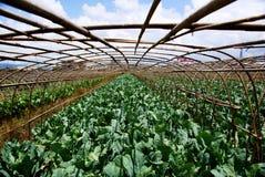 Agricoltura del terreno coltivabile Fotografie Stock