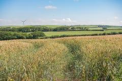 Agricoltura del vento Fotografia Stock Libera da Diritti