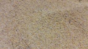 Agricoltura del verme del pasto 'del cereale' Immagini Stock