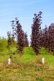 agricoltura del verticale dell'albero Immagini Stock