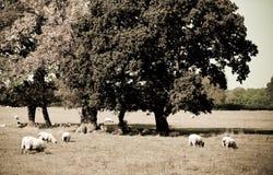 Agricoltura del Victorian Fotografie Stock