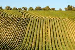 Agricoltura del vino in Reno-Hesse Immagini Stock Libere da Diritti