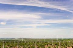 Agricoltura del vino in Reno-Hesse nella primavera, Germania Immagini Stock
