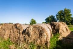 Agricoltura dell'alimentazione del bestiame delle balle dell'erba Immagini Stock