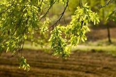 Agricoltura dell'Andalusia Fotografia Stock