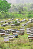 Agricoltura dell'ape Immagine Stock