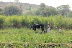 Agricoltura dell'attività in villaggi indiani rurali fotografie stock libere da diritti