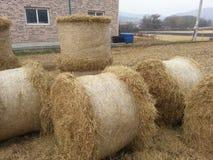 Agricoltura dell'azienda agricola del mucchio della paglia Fotografie Stock