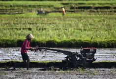 AGRICOLTURA DELL'INDONESIA Immagini Stock Libere da Diritti