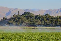 Agricoltura dell'innaffiatura lavorando la terra Immagine Stock