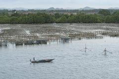 Agricoltura dell'ostrica Fotografia Stock