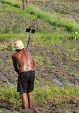 Agricoltura dell'uomo Fotografie Stock Libere da Diritti