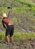 Agricoltura dell'uomo Immagine Stock