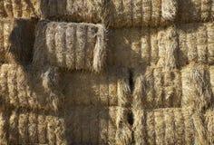 Agricoltura della balla di fieno di agricoltura Fotografie Stock Libere da Diritti