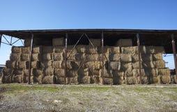 Agricoltura della balla di fieno di agricoltura Immagine Stock Libera da Diritti