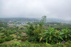 Agricoltura della banana sulla montagna del villaggio in foresta con foschia ed il cielo nuvoloso Fotografia Stock Libera da Diritti