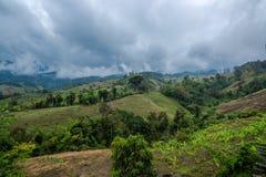 Agricoltura della banana sulla montagna in foresta con foschia ed il cielo nuvoloso Immagine Stock