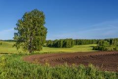 Agricoltura della betulla del solco del prato del campo Fotografia Stock Libera da Diritti