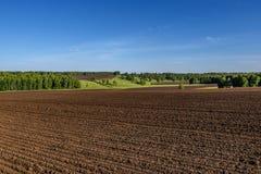 Agricoltura della betulla del solco del prato del campo Fotografia Stock
