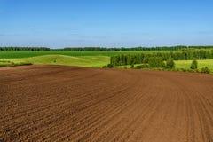 Agricoltura della betulla del solco del prato del campo Immagine Stock