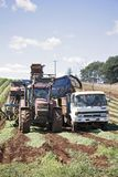 Agricoltura della carota in Tasmania Fotografie Stock